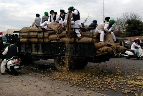 farmers throwing potato on road